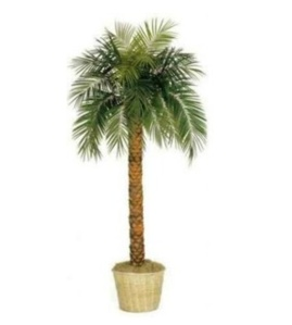 How about purchasing your own Palm Tree? Photo creditL Polyvore.com